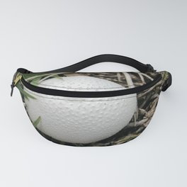 Fungus growing in Queensland Fanny Pack