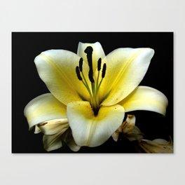 Wonderful Flower yellow and black Canvas Print