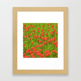 tulips field Framed Art Print