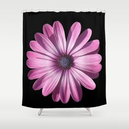 Spectacular African Daisy Isolated On Black Shower Curtain