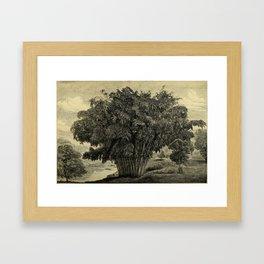 The Gardeners' Chronicle 1881 Framed Art Print