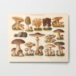Edible Mushrooms Metal Print