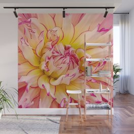 Pink Dahlia with Bright Pink tips Close Up Detail Wall Mural