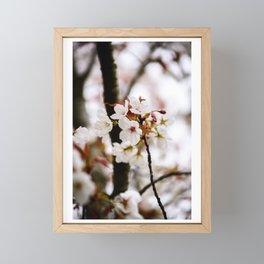 White Cherry Blossoms Framed Mini Art Print