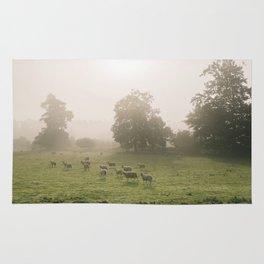 Sunrise burning through heavy fog over field of grazing sheep. Norfolk, UK. Rug