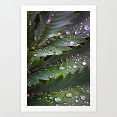 Water Drops Plant Art Print