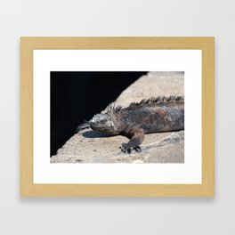 As cool as an iguana Framed Art Print