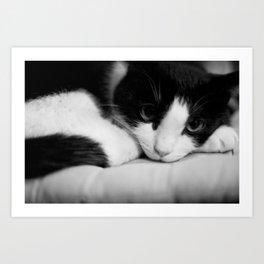 Cat black and white Art Print
