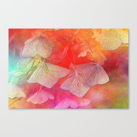 Withered hydrangea Canvas Print