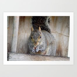 Oh Nuts You Caught Me Art Print
