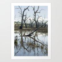 Winton Wetlands Art Print