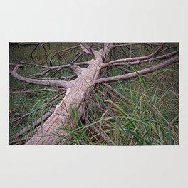 Fallen Pine Tree at Ludington State Park, Michigan Rug