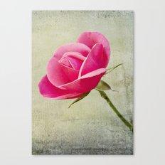 Virgin Rose Canvas Print