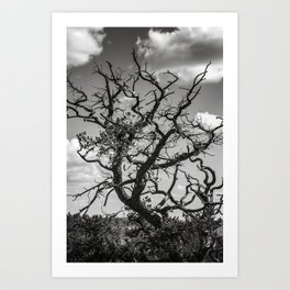 Ancient Tree, Survivor, Alive Art Print
