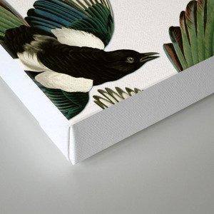 A Tiding Of Magpies Canvas Print