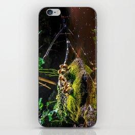 Mallard ducklings on a stone iPhone Skin