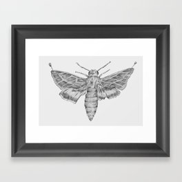 Moth Framed Art Print