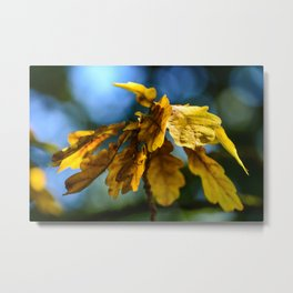 Golden oak leaves Metal Print