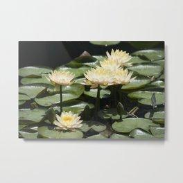 Longwood Gardens - Spring Series 276 Metal Print