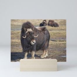 Arctic Muskox Mini Art Print