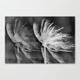 Palms black and white Canvas Print