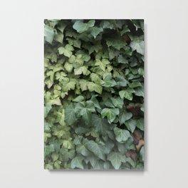 Ivy Metal Print