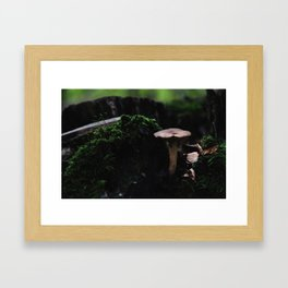 Fungi I Framed Art Print