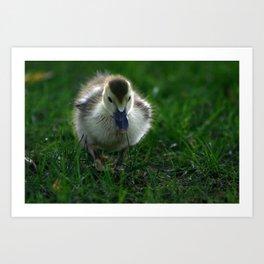 Cute Duckling Walking on a Lawn Art Print
