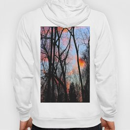Sunset Through the Tangled Trees Hoody