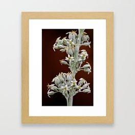 Florals  Framed Art Print