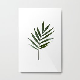 Plant Leaves Metal Print
