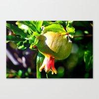 pomegranate Canvas Prints featuring pomegranate by  Agostino Lo Coco