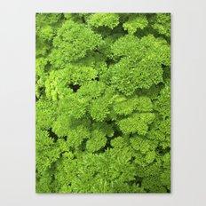 green garden herb II Canvas Print