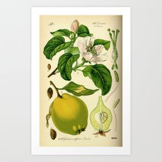 Botanical Print Art Print