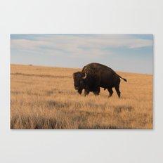 Bison Bull in Badlands Canvas Print