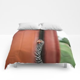 Curious Chicken Comforters