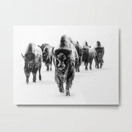 Bisons, black and white Metal Print