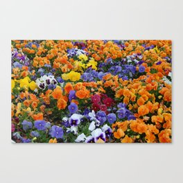 Pancy Flower 2 Canvas Print