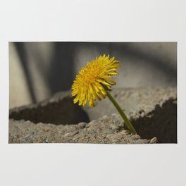 Dandelion That Grew From Concrete Rug
