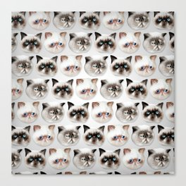 Studley Cats Canvas Print