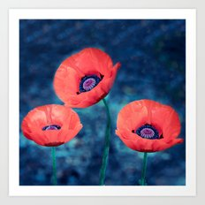Poppy trio Art Print