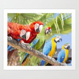 Curious macaws Art Print