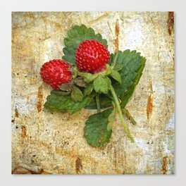 Indian strawberries on birch bark Canvas Print