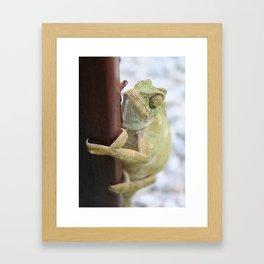 I'm A Bit Of A Chameleon Framed Art Print