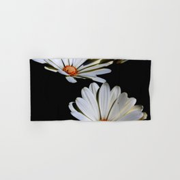 White African Daisies Isolated on Black Hand & Bath Towel