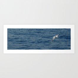 Seagull in Croatia #1 Art Print