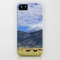 Field of Cows iPhone (5, 5s) Slim Case