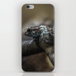 Small exotic frog on the branch iPhone Skin