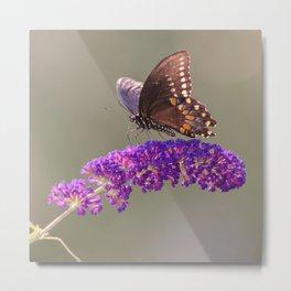 Papillon Sur Fleur Metal Print