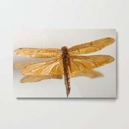 Gilt Dragonfly Metal Print